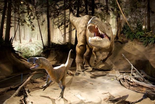 Albertosaurus diorama