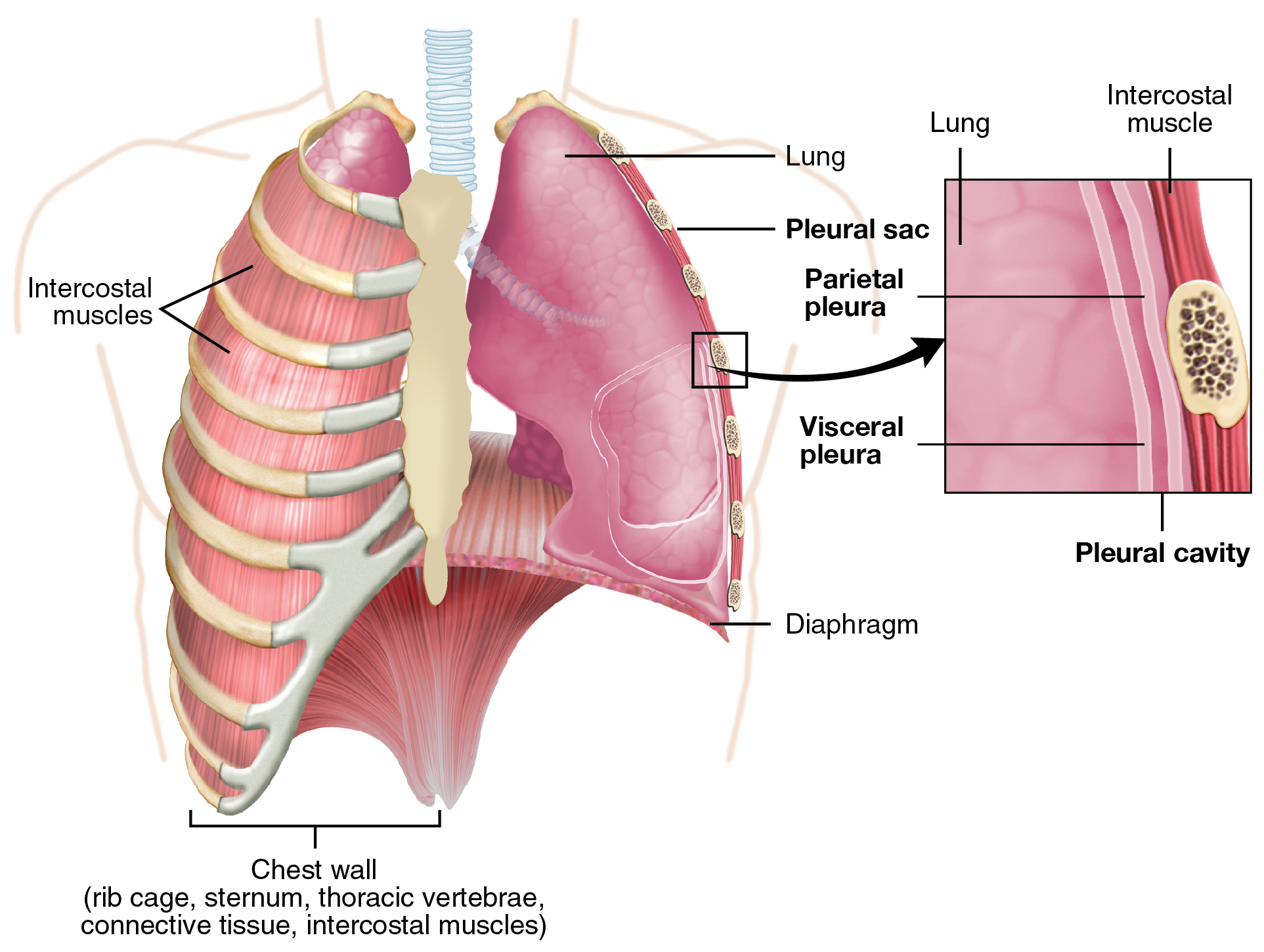 Chest Drains indications, insertion and management