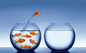 gold-fish-jumping