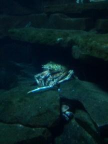 A crab and turtle at the Zoologischer Garten Berlin aquarium.