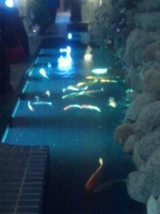 Viewing pool at the Zoologischer Garten Berlin's aquarium. Fishies!