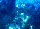 The tropical area of the Zoologischer Garten Berlin aquarium, much less blue in actuality.