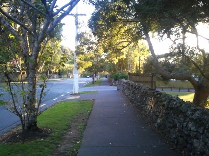 A very pretty treelined street in Auckland.