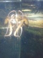 An octopus (and its reflection) at Kelly Tarlton's.
