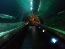 Part of the underwater viewing tunnel at Kelly Tarlton's aquarium.