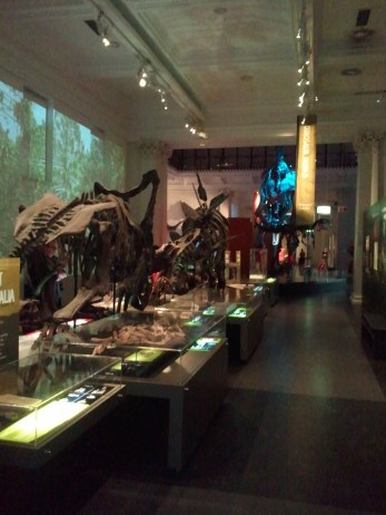 Part of the dinosaur exhibition at the Australian Museum.