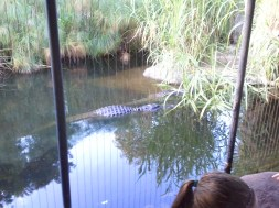 Crocodiles at the Taronga Zoo. Why yes, I *was* happy there was a fence between them and me. :)