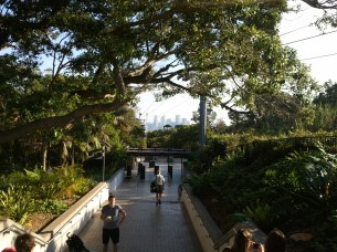 One of the main walkways of the Taronga Zoo. I loved the juxtapositions in this scene: aerial tram and city skyline and dense foliage and people, all together.