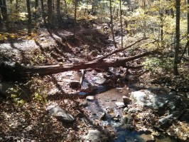 A picturesque stream across the Doyles River Falls trail.