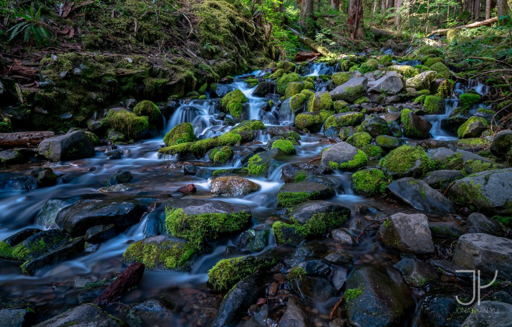 Just your regular beautiful stream, hidden away in the majestic rain forests of Olympic National Park