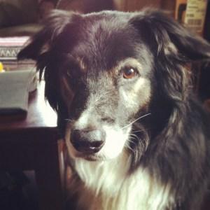 Flea's Wonder Dog, Flash, can't get over not having treats