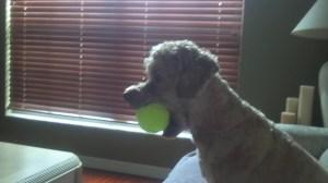 Max, the Goofy Dog