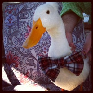 Jimmy the duck ROCKS a bow tie. Naturally.