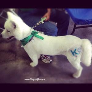 White tatt dog
