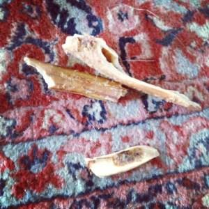 Splintered dog bone