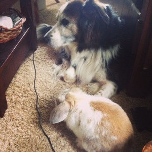 Dog and Bunny relaxing
