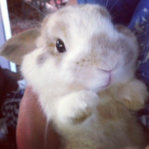 Humperdink, the Holland Lop
