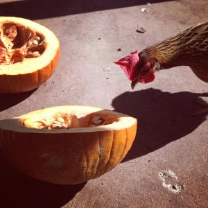 Chicken and pumpkin