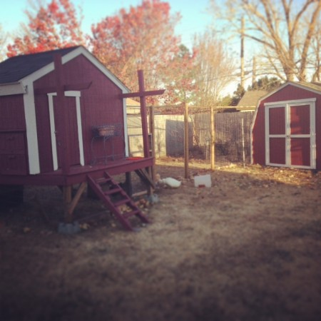 Pretty chicken coop and shed