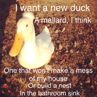 Want a New Duck
