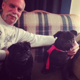 Adorable black Pugs