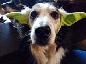 An Aussie plays Yoda on the small screen