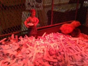 Baby quail at Blog Paws