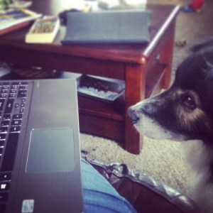 The Aussie does the blogging for me