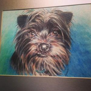 Colored pencil pet portrait