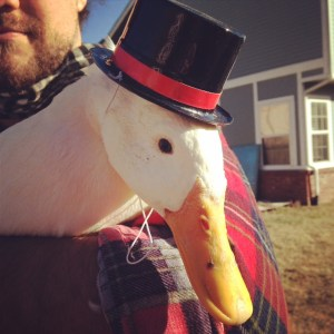 Duck in a hat