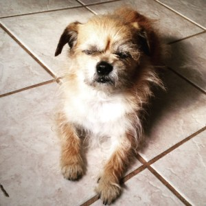 Asking for advice for my little dogs www.dogtreatweb.com