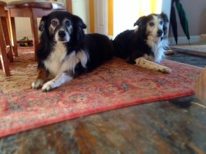 How cancer effects my senior dogs