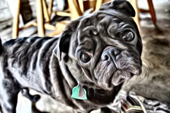 Pug thru a SuperPhoto app