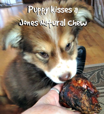 Puppy kisses and nibbles on the Knee Cap from Jones Natural Chews