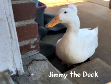 Musical dogs vs Jimmy the Duck