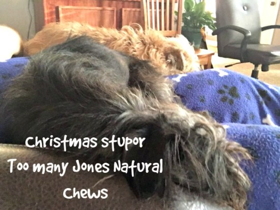Say cheese! The dogs are in a Christmas stupor after too many Jones Natural Chews treats