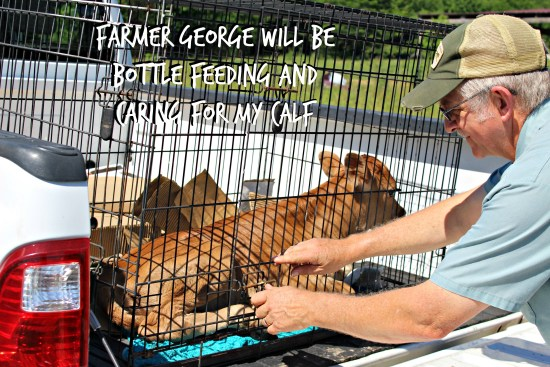 Farmer George and the Calf