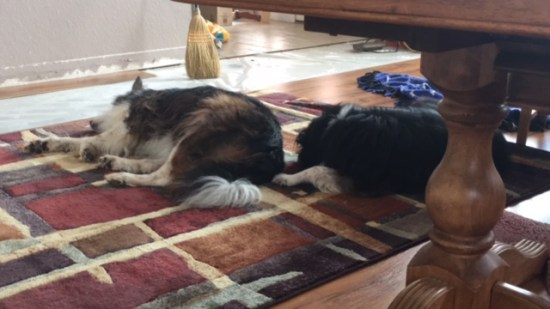 A soft resting place helps senior dog joints and bones