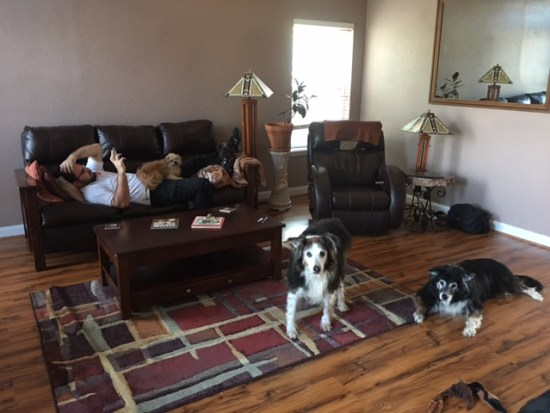 Dogs dress up any room
