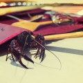 Crawfish walks on table top outdoors