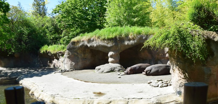 oregon-zoo-008
