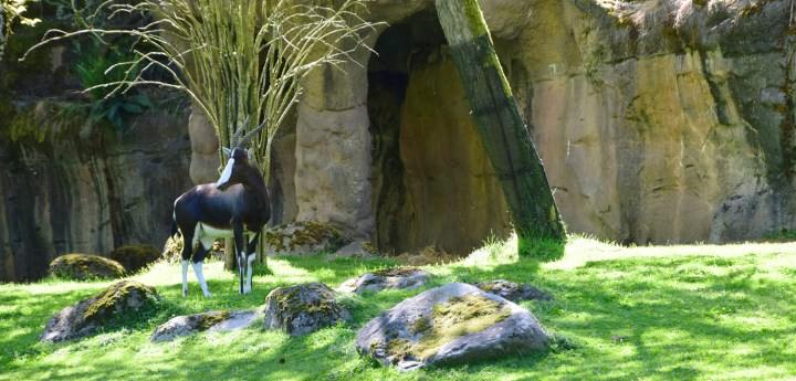 oregon-zoo-012