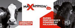 Maxammon poster