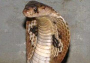 Estudante picado por cobra naja terá alta neste sábado (10/07)