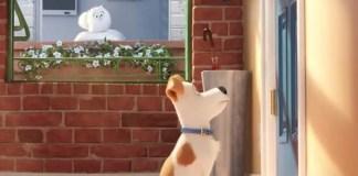 Imagem de Pets