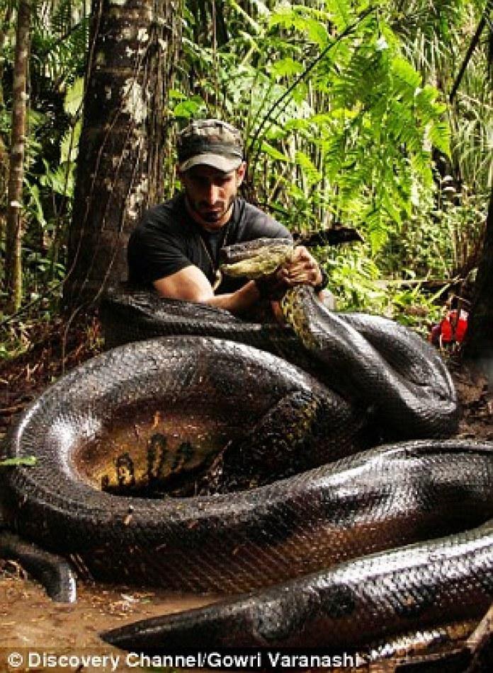 este-homem-foi-engolido-por-uma-anaconda-1