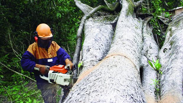Moratória da soja, acordo entre sociedade civil e exportadores do grão, previa desmatamento zero na Amazônia | Foto: Fernando Leite/Jornal Opção