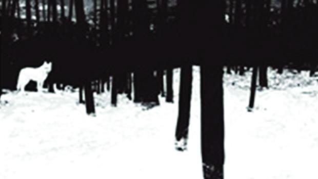 Companhia das Letras/Penguin lança nova tradução do romance Caninos Brancos, de Jack London