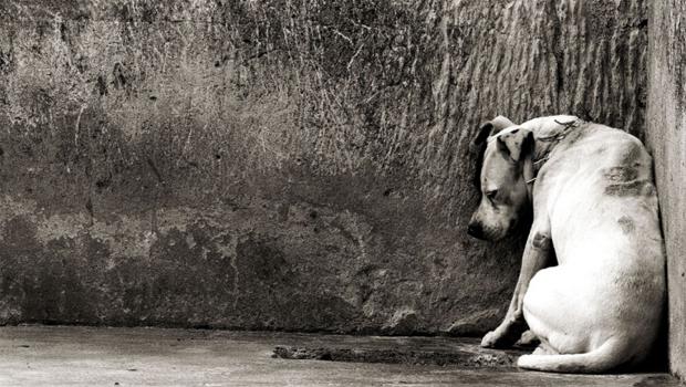 cachorro abandonado 620