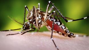 Goiás tem segundo caso suspeito de febre chikungunya